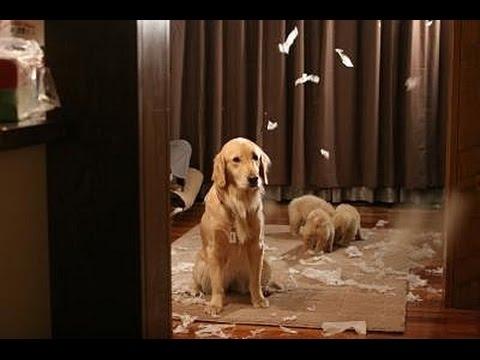 【閲覧注意】思わず笑っちゃう!犬たちのいたずらアレコレ