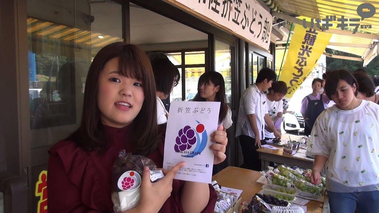 女子大生がロゴ作成「折笠ぶどう」ブランド化へ【いばキラニュース】H29.9.14