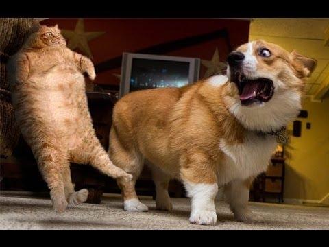 「絶対笑う」最高におもしろ犬,猫,動物のハプニング, 失敗画像集 #2