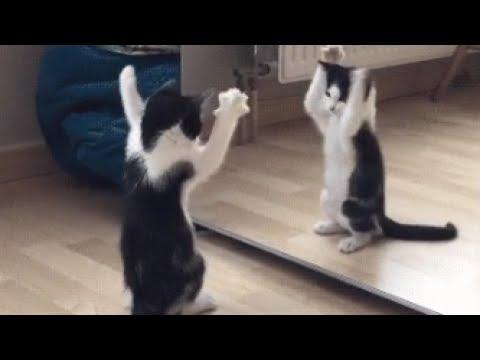 絶対笑う おもしろかわいい猫GIF画像集!【腹筋崩壊】