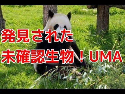 【衝撃】パンダ!? ゴリラ!? 発見された未確認生物!UMA