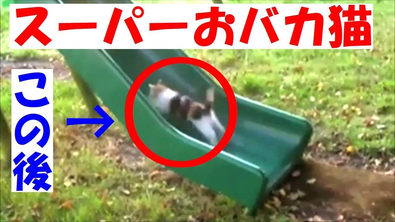 【絶対笑う衝撃】超ドジなスーパー猫!世界が爆笑したその正体とは!?【仰天ハプニング動物】