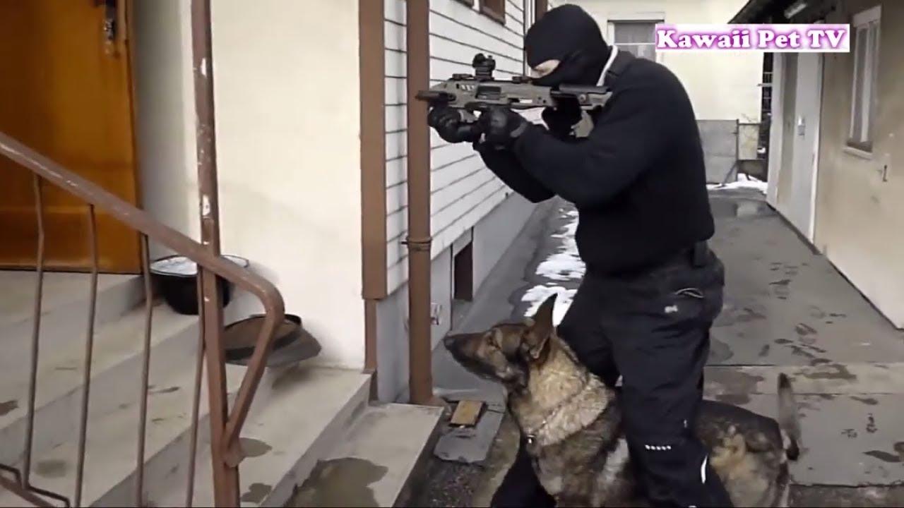 警察犬の実力がすごすぎる・シェパード犬による犯人逮捕
