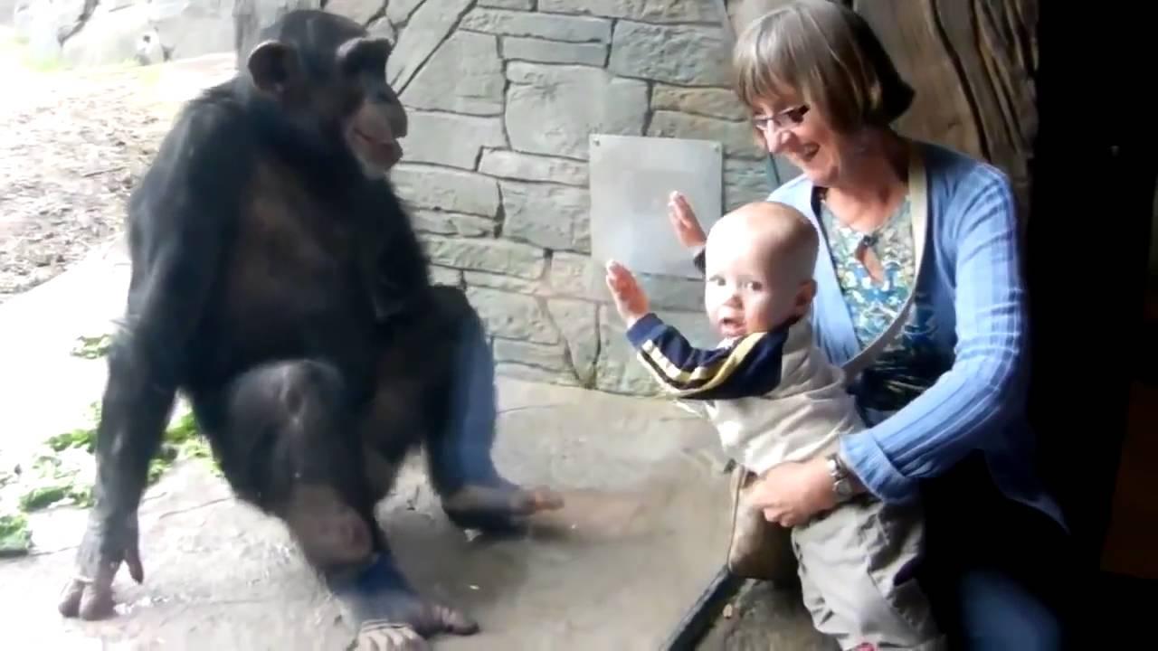 【キチガイ】赤ちゃんに キレる さる