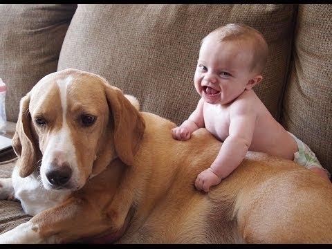 犬の編集でヒステリックに笑っている赤ちゃん