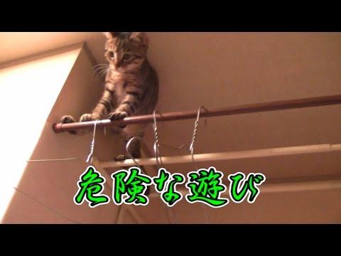 【第92話】危ない遊びをする子猫に天罰が・・・(面白い&可愛い子猫)