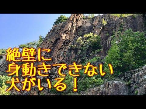 【危機一髪】断崖絶壁!険しい崖の中腹で身動きできない犬がいる!犬を驚かせれば一貫の終わり・・命がけの救出が始まる!!