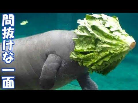 【爆笑】動物たちのドジな失敗集13選♪ ちょっと間抜けなGIF動画集。
