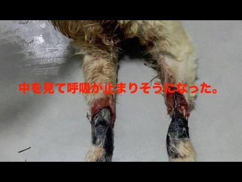 【衝撃】犬肉ファームのゴミ箱からラブラドールの子犬が発見される