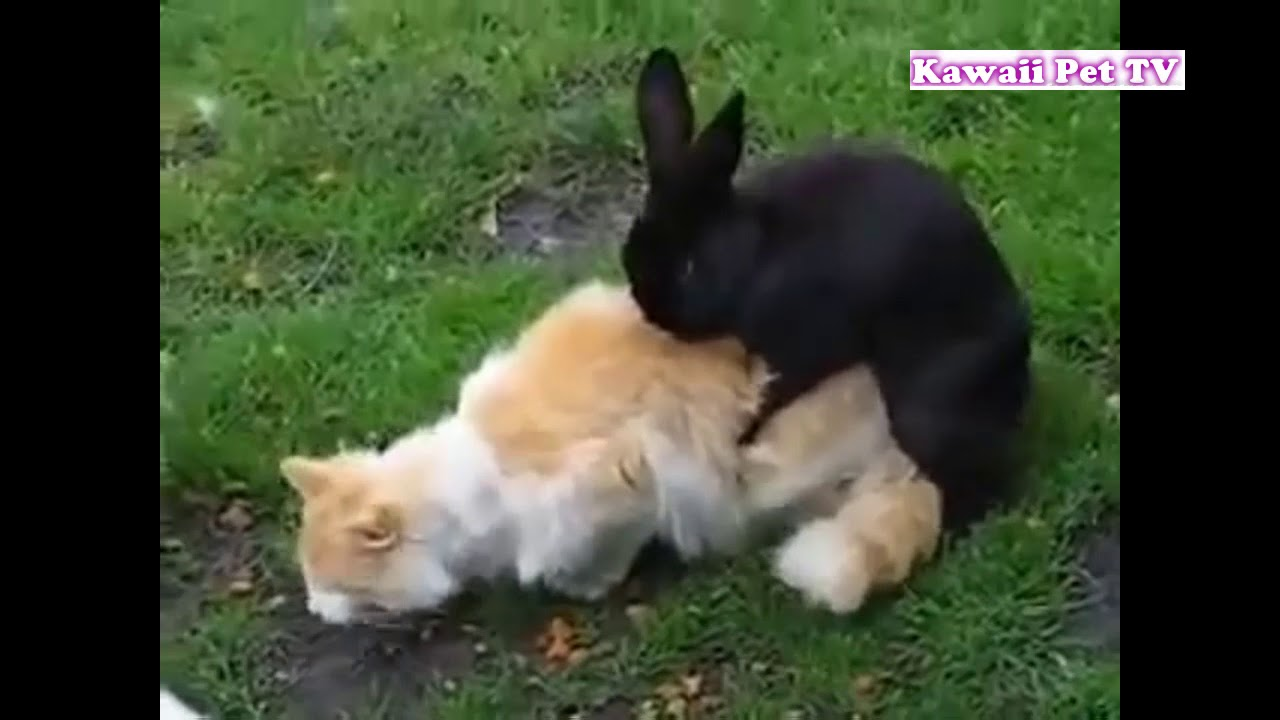 「おもしろ動物」犬, ウサギ, 猫の発情期のおもしろハプニング集・超かわいい