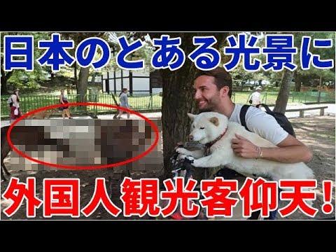 海外の反応 衝撃!外国人観光客仰天?「日本には愛すべき場所がたっっっくさんあるね」日本のとある光景に親日家達も大反響!!!その理由とは?
