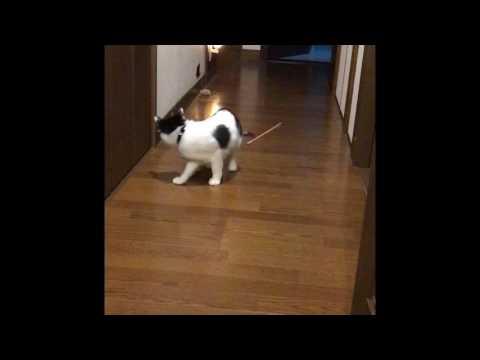 猫らしからぬ見事なずっこけ