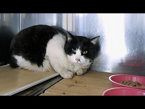 【地域猫】史上最高に不機嫌なナナ姫が病院のゲージで待っていた。~ナナ姫!病院から河原に帰る!~【魚くれくれ野良猫製作委員会】