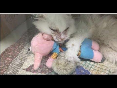 衰弱しきった子猫の命は、まさに崖っぷち状態だった。保護施設の介護人すら安楽死を考慮した。