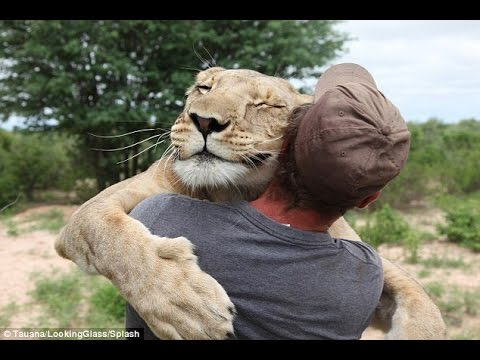 「感動再会」見てて幸せな気分になるライオンと人間の感動再会