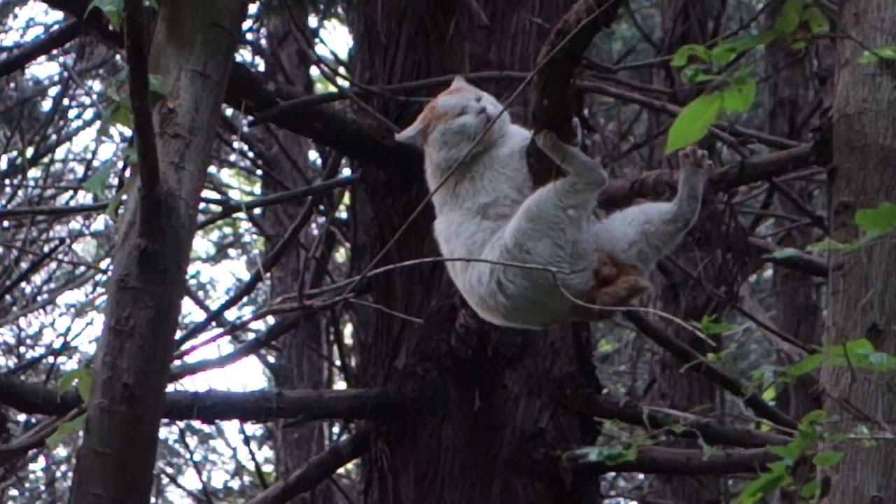 木から落ちる間抜けネコ