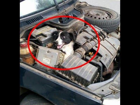 突然車が止まりエンジンを確認する女性、なんとその中には笑顔の犬が!【癒される話】