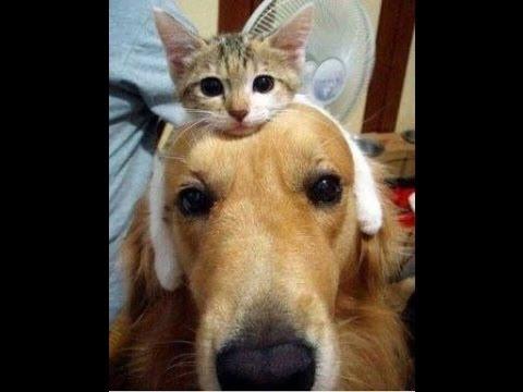 【感動癒し】 動物たちの友情、愛情画像集でほっこり!