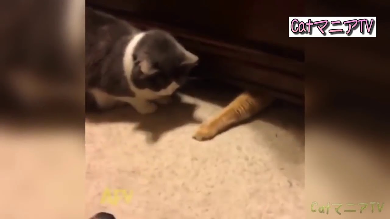 最高におもしろい!猫のハプニング・おもしろ行動 総集編2018 103