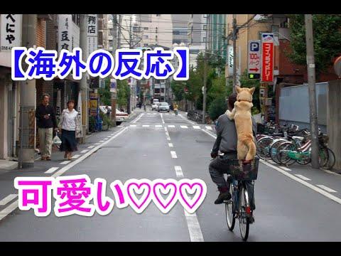 【海外の反応】「日本ならではだなぁ~」日本の路上で目撃されたとある光景に海外がうっとり!
