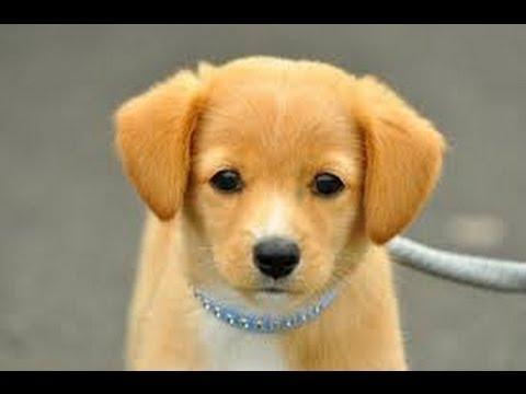 ギネスに載った世界一賢い犬。犬