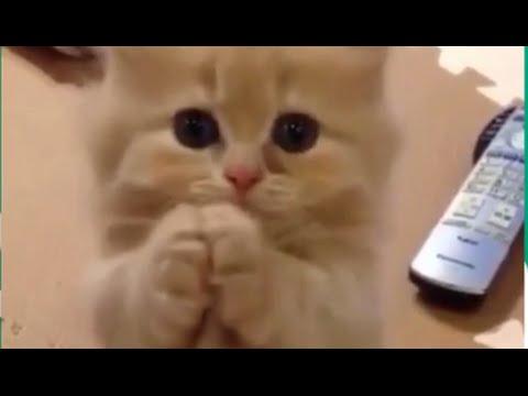 絶対癒されるペットの仕草Vineまとめ 可愛い動物の癒し映像 Funny Animals Compilarion