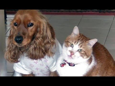 犬が旅立ちました 猫の様子に泣けた・・・