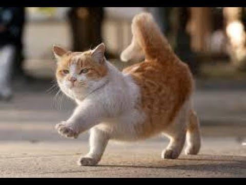 【吹いたら負け】ジワジワ来るww ネコのおもしろ画像集 ニヤニヤ出来るおもしろ可愛い猫まとめ 【癒されて笑える!!】