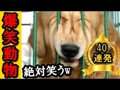 【絶対笑う】最高に面白い動物ネタでボケて40連発総集編