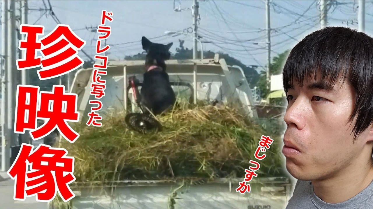 犬が乗車!?ドラレコに記録された珍映像。