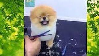 【キュン死確定!】Twitterで話題の『おもしろ&ほっこり動物ムービー』を集めてみた!funny Videos