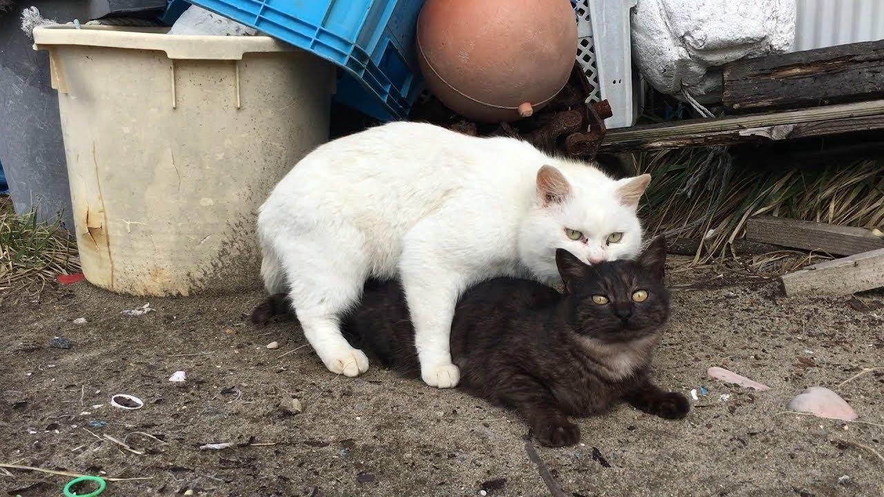 交尾を仕掛けるタイミングが卑劣すぎる白猫