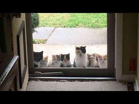 玄関先に突然現れた7匹の猫たち。一体なぜ?思いもよらない出来事に大反響。