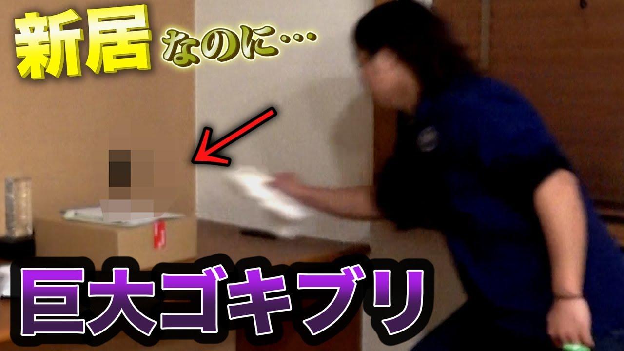 【閲覧注意】新居にもう巨大なゴキブリ出て大パニック!
