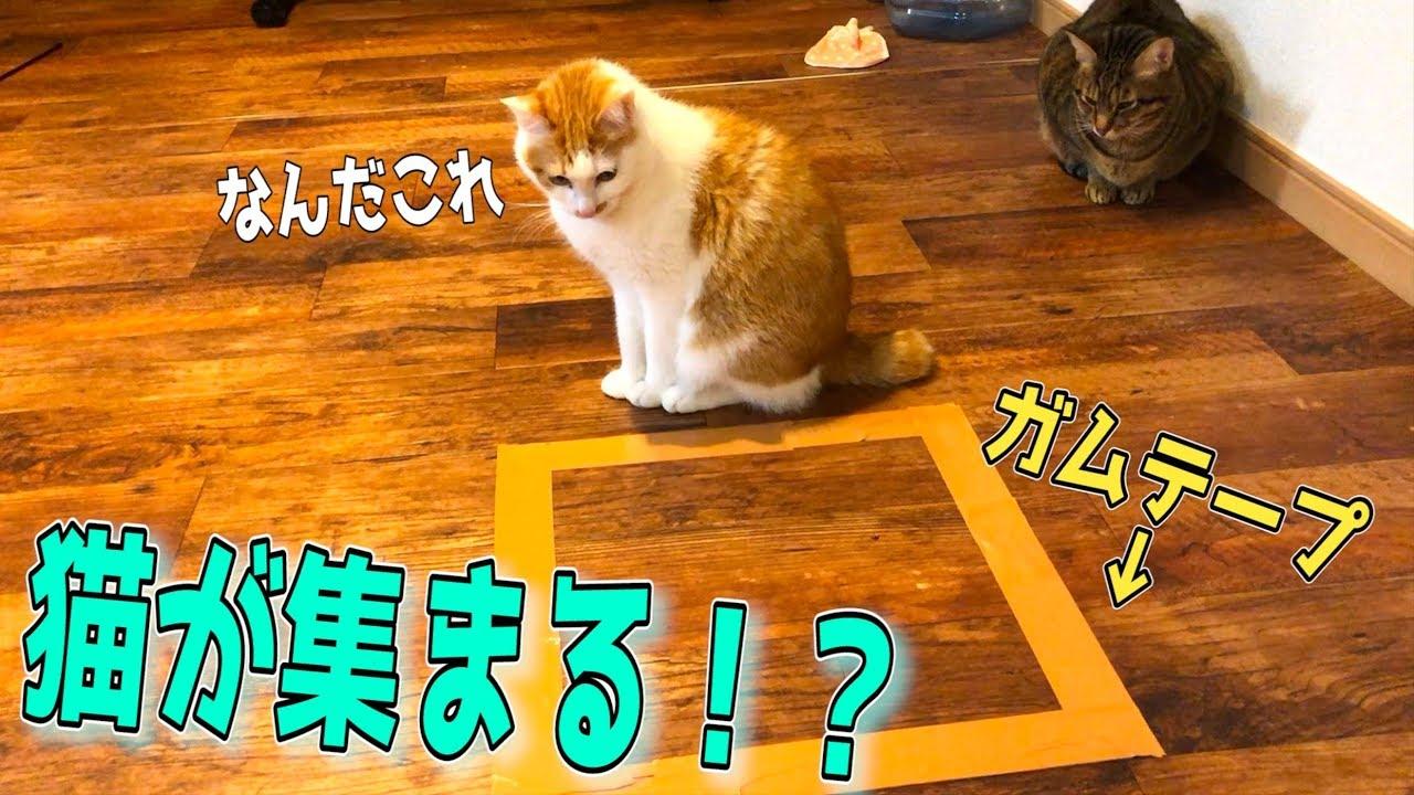 【裏技】床にガムテープで囲いを作ると猫達が集まってくるらしい…!!!