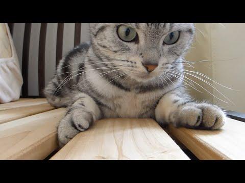 不意の一撃をくらった猫が精神的ショックから…またやらかした!!【オチあり】-Funny Cat can't get over the shock