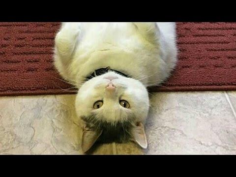 【吹いたら負け】ジワジワ来るww ネコのおもしろ画像集② おもしろ可愛い猫のツイートまとめ 疲れた時にどうぞ!【癒されて笑える!!】