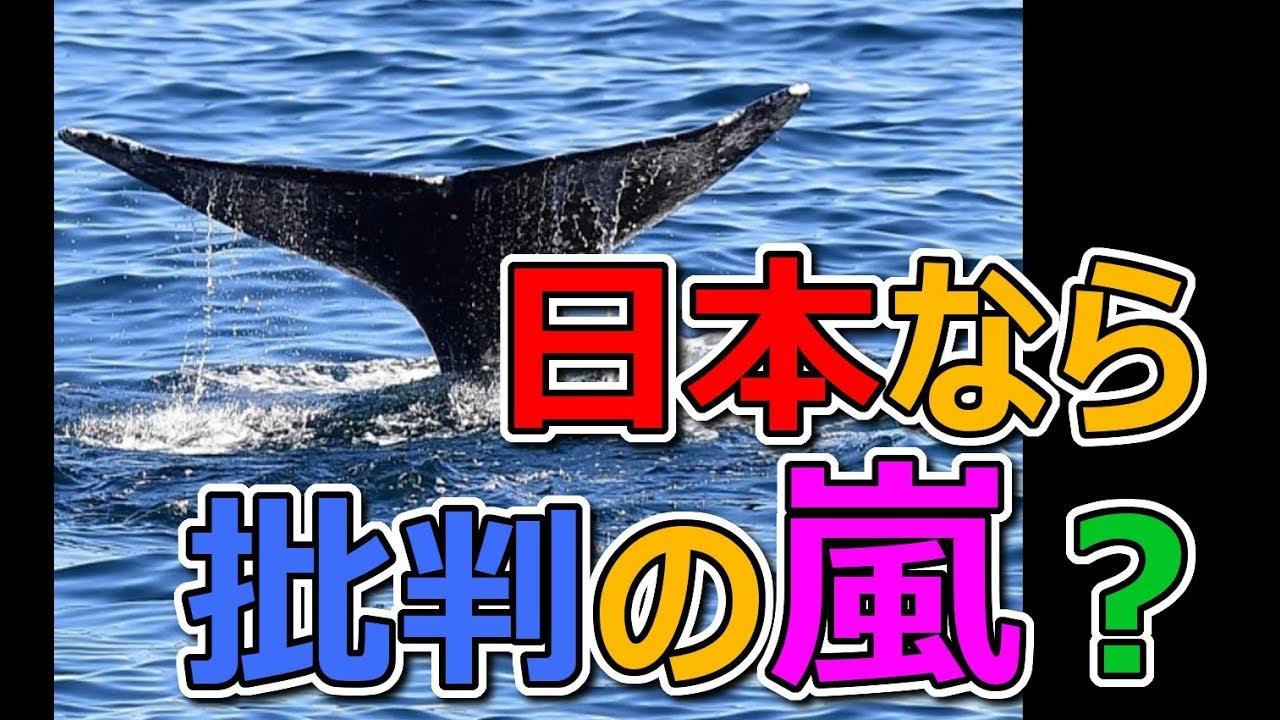 【海外の反応】「メディアは恥を知るべき!」日本だと非難殺到する欧州の捕鯨に対する予想外の反応が面白い!
