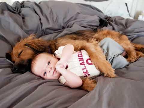 【癒し 動物】動物達の超絶かわいい写真! ただただ、心から癒される!【ハートセラピー】