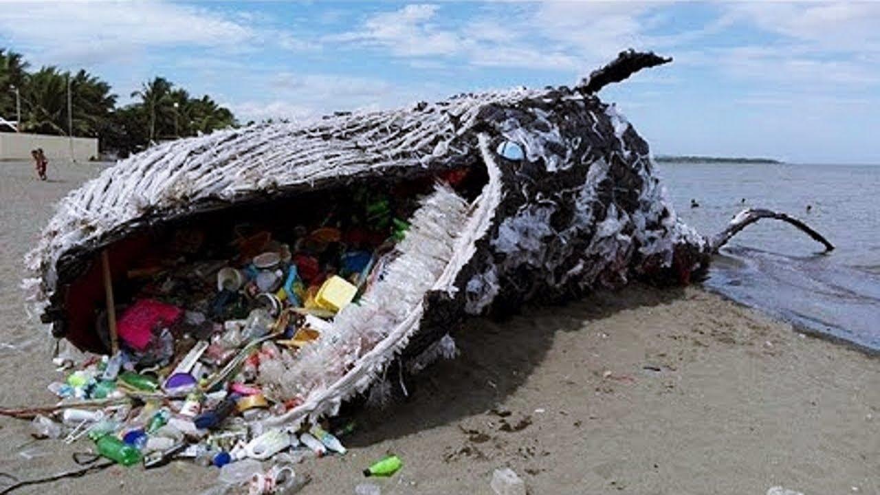 【衝撃】海岸で発見されたミステリアスなもの5選。
