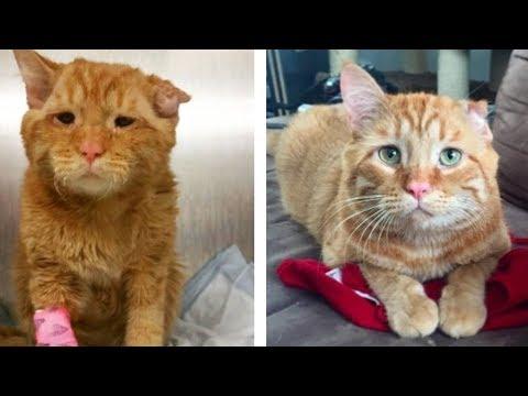 【九死に一生】悲しい顔をした猫、笑顔をくれた女性との奇跡の出会いによって笑顔を取り戻す【感動する話】