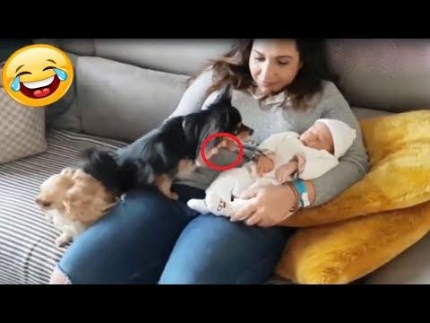 「かわいい犬」初めて人間の赤ちゃんに会った犬の反応が超面白い・ビビりながら超嬉しそう