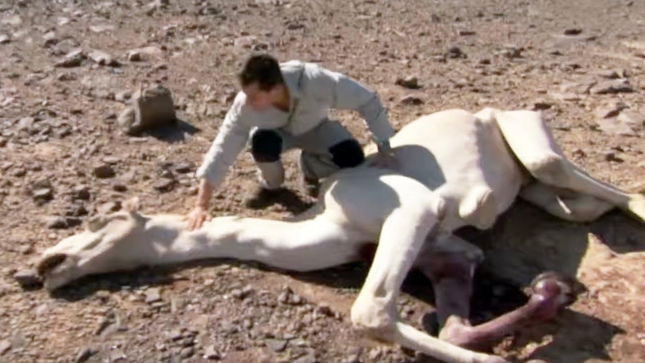 【閲覧注意】ラクダを食べてみた | サバイバルゲーム #ディスカバリーチャンネル