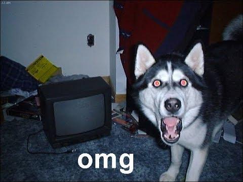 「おもしろ犬」突然飼い主が消えたら犬, 猫がどう反応するのか