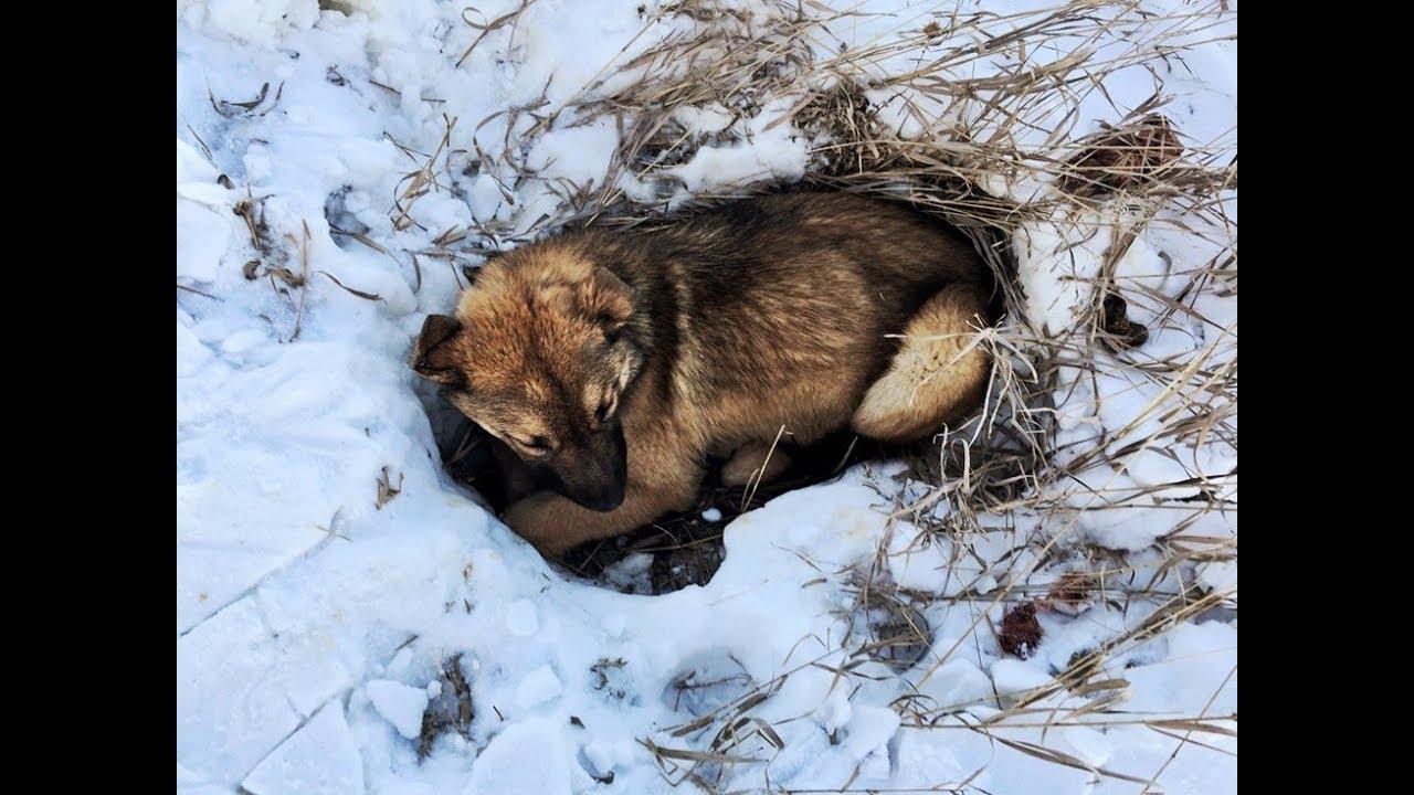 車に引きずられ体が麻痺した生後7か月の子犬は溝にはまり雪が降り積もったため誰にも気づかれない事態に!