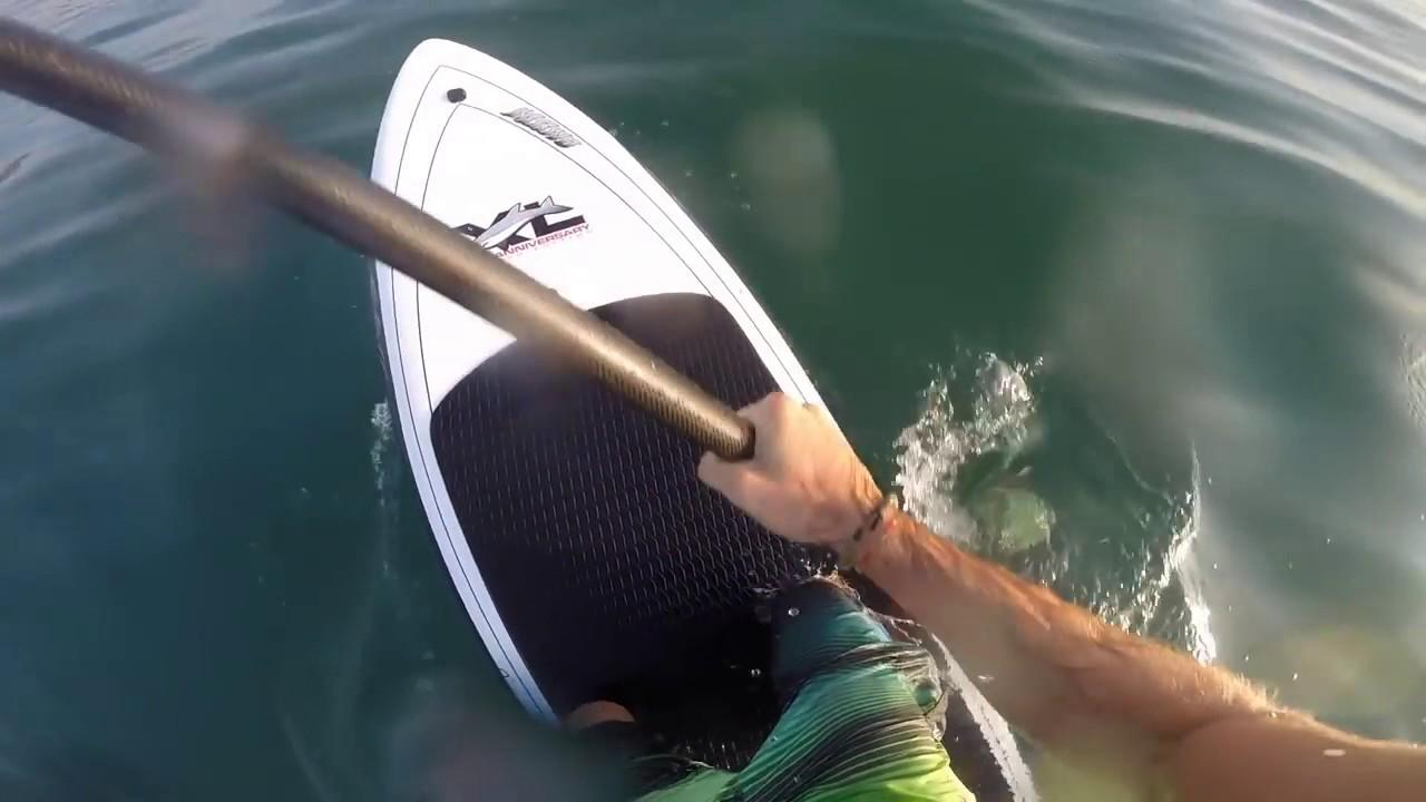 【恐怖】カメラが捉えた恐ろしいサメの衝撃映像!