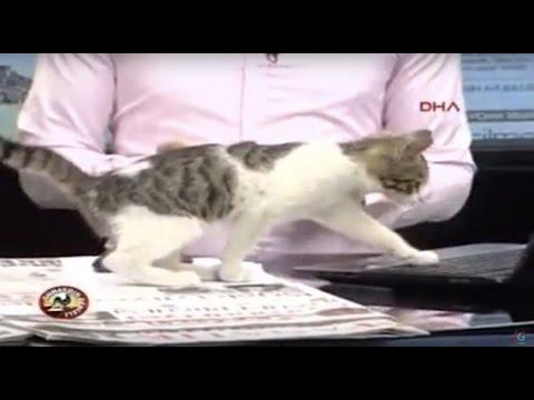 【放送事故】ニュースの生放送に猫が乱入! 大暴走して思わぬ展開に!!
