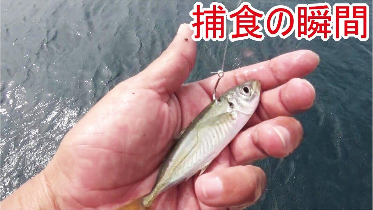 堤防エレベーター泳がせ釣り中カメラの前で食い付く生物と遭遇#3