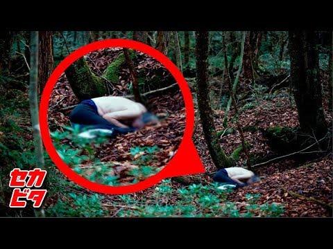 震撼!森の中で目撃した衝撃の展開11選