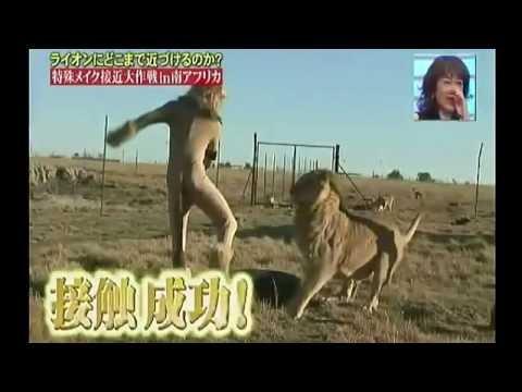 爆笑野生獅子觸碰大作戰!